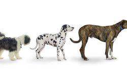 Des tests ADN sur les crottes de chien pour traquer les