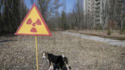 L'accident de Tchernobyl a-t-il vraiment créé des mutants