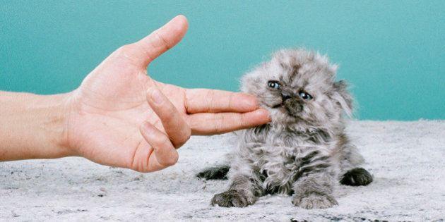 PHOTOS. Les chats comme vous ne les avez jamais