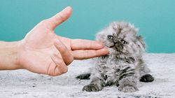 Cette série de clichés sur les chats va vous faire oublier les