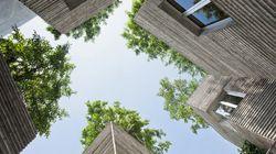 Des arbres plantés sur des toits de maison à
