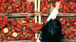 Pour la justice italienne, voler pour manger n'est pas un