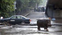 Des animaux sauvages en liberté après des inondations meurtrières à Tbilissi en