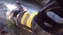 Ces pompiers sauvent des chatons d'un incendie de la plus douce des