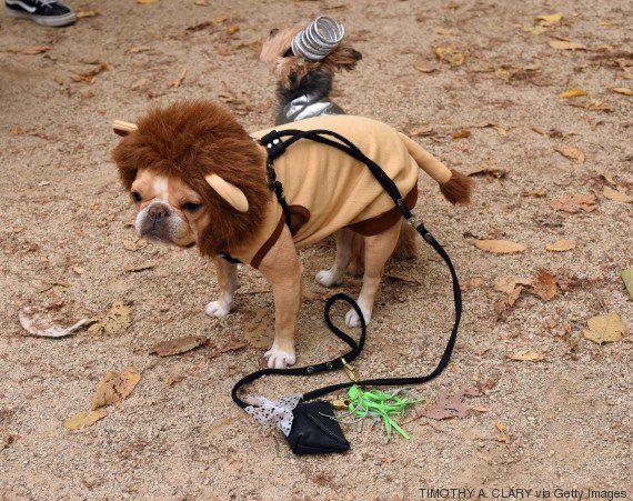 VIDÉO. Les meilleurs déguisements Halloween... pour les
