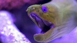 La lumière est faite sur le mystère des poissons