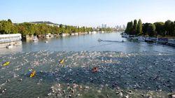 Se baigner dans la Seine, le serpent de mer