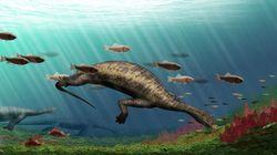 N'ayez pas peur de ce reptile préhistorique avec une tête en forme