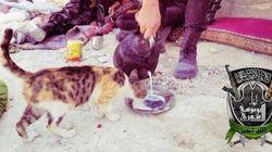 Les djihadistes irakiens font leur propagande avec des chats