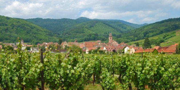 Wineries around Riquewihr Elsass France