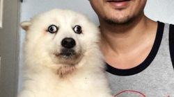 La photo de ce chien vaut le