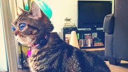 Matilda, le chat extraterrestre aux yeux
