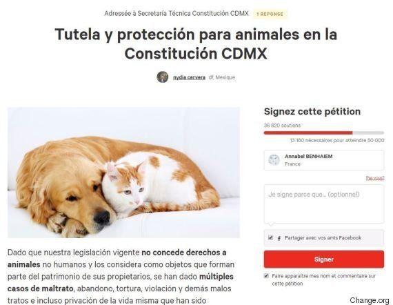 Les droits des animaux bien partis pour figurer dans la Constitution de