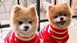 Ces 20 paires d'animaux jumeaux vont vous faire fondre de