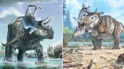 Ces deux nouveaux dinosaures ont des cornes bien