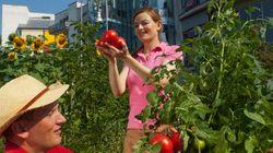 10 bonnes raisons de cultiver des fruits et des légumes en
