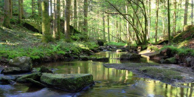 paysage de sous bois en forêt où s'écoule paisiblement une petite