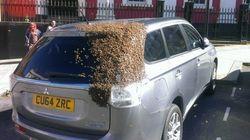 L'énorme tache marron sur cette voiture est en