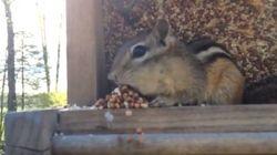 Cet écureuil est le plus honnête des