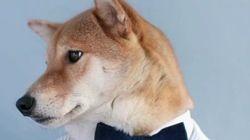 Ce chien est mannequin pour