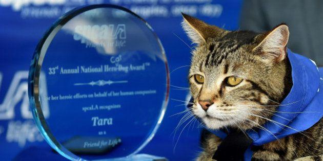 VIDÉO. Ce chat avait sauvé un enfant, il a été récompensé pour sa bonne