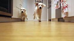 Il filme ses chiens courant vers leur gamelle tous les jours pendant 9