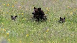 Déçu de ne pas avoir vu d'ours dans le parc naturel de Yellowtsone, un touriste fait une étrange