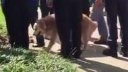 Le dernier chien sauveteur du 11 septembre est