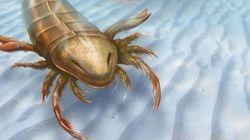 Découvrez ce scorpion des mers géant aussi grand qu'un