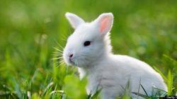 Des lapins en