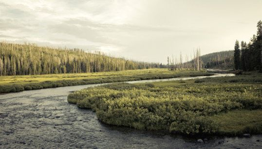 Le Yellowstone National Park en 10