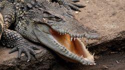 Bientôt une île-prison gardée par des crocodiles en