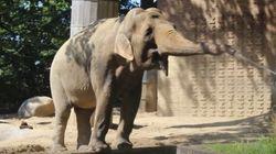 Cet éléphant a trouvé comment utiliser l'arrosage