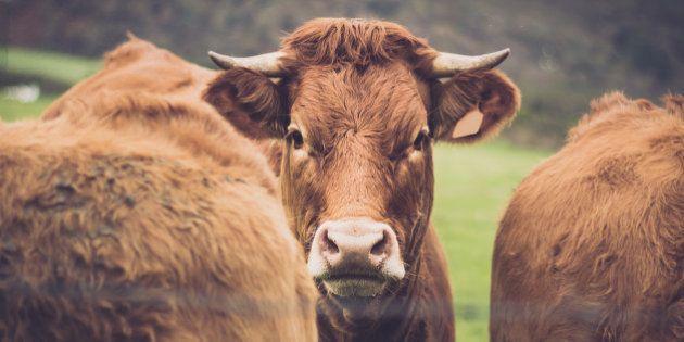 Statut de l'animal dans le Code civil : cette évolution