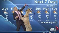Il tente de présenter le bulletin météo avec un chien. Mauvaise