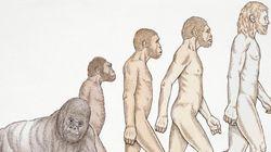 Oui, Christiane Taubira est un singe. Et moi