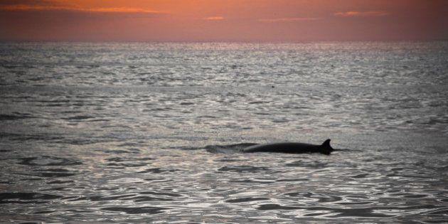 Chant des baleines: Le son mystérieux sous-marin enfin