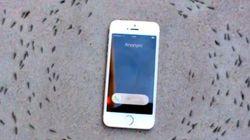 Non, cette vidéo ne prouve pas que les ondes téléphoniques influencent les