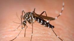Quatre personnes contractent le chikungunya en plein