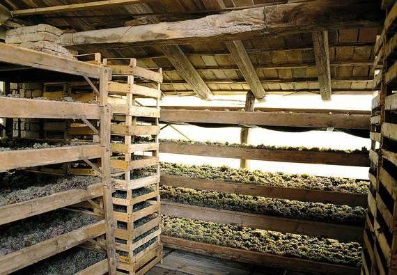 Croquets aux pistaches - Le vin qui va