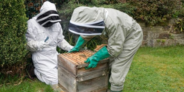Beekeepers in protective suits