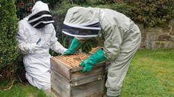 Si vous voulez installer une ruche au fond de votre jardin, voilà ce que ça vous