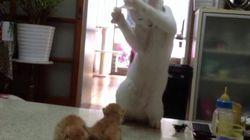 Ce chat donne des cours de boxe à des