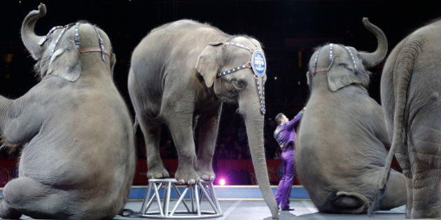Asian elephants perform for the final time in the Ringling Bros. and Barnum & Bailey Circus Sunday, May...