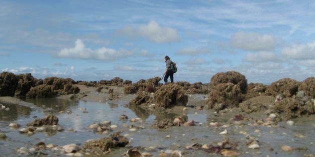 Voilà, vous allez assister à une petit leçon de pêche. Les espèces de coraux que le voit sortir du sol...
