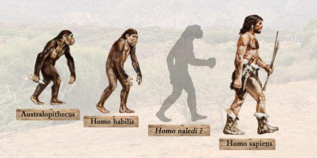 L'Homo naledi, ancienne espèce humaine inconnue, est-il notre ancêtre ou notre cousin ?