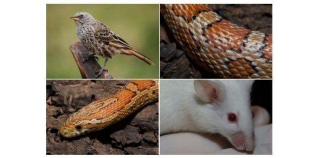 On sait désormais que poils, plumes et écailles ont tous la même