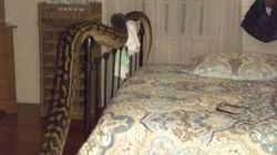 Elle est réveillée en pleine nuit par un serpent de 5