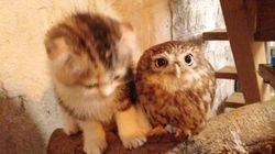 L'adorable amitié entre un chaton et un bébé