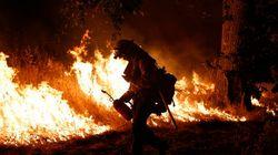 PHOTOS. Incendies monstres en Californie : l'état d'urgence décrété, des milliers de personnes forcées de